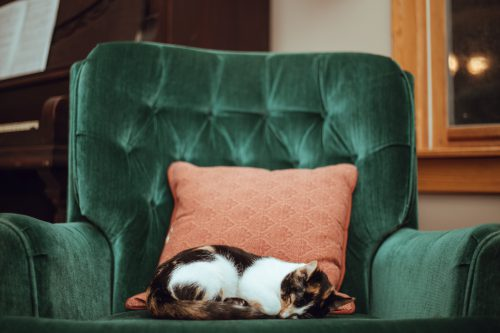 chat endormi dans un fauteuil vert
