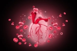 Artère Coeur