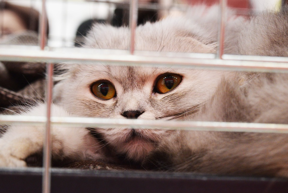 Vétérinaire : comment préparer les visites de son chat ?
